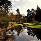 Botanical Garden. by Finbarr Reilly