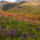Bluebells and Ben Lomond by Birgit Van den Broeck