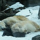 Sleeping Polar Bears, Central Park Zoo by lenspiro