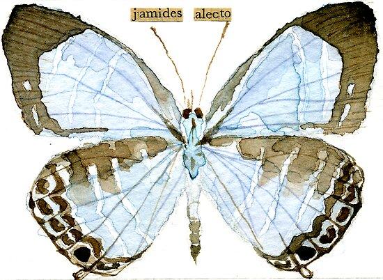 Metallic Cerulean Butterfly [Jamides alecto] by Carol Kroll