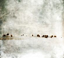 Blenheim Palace cows by Lucy Martin