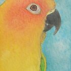 Sun Conure - ACEO by Joann Barrack