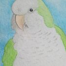 Quaker (Monk) Parakeet - ACEO by Joann Barrack