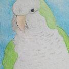 Quaker (Monk) Parakeet - ACEO by Joann Barrack