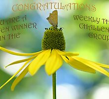 weekly theme challenge banner by Manon Boily