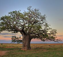 Dinner Tree by Mark Ingram