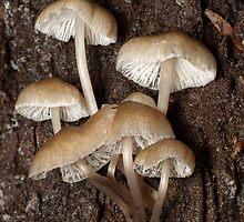 Fungi by Andrew Trevor-Jones