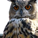 Elvis, the Indian Eagle Owl  by Marilyn Harris