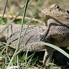 Grouchy Bearded Dragon by Teymour Dymock-Nadjafi