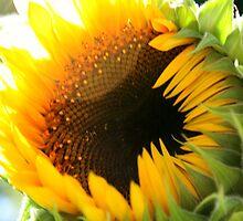 Sunflower by chrstnes73