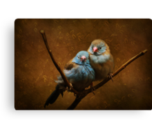 Male and Female Cordon Bleus Canvas Print