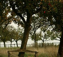 Apple Tree by chrstnes73