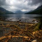Buttermere Roots by Paul Thompson Photography