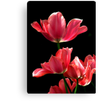 A Hot Pink Pirouette Canvas Print