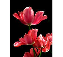 A Hot Pink Pirouette Photographic Print
