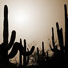 Saguaro Forest by Greg Allen