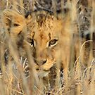 Great camouflage! by jozi1