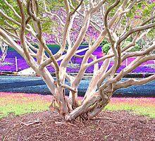 Auburn Tree by keenu