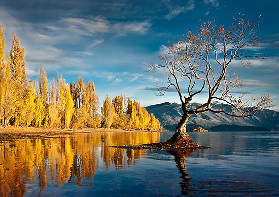 Wanaka Tree by Robert Dettman