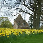 Yellow Haven by Photos  D'Argent