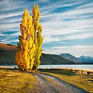 Tekapo Morning by Robert Dettman