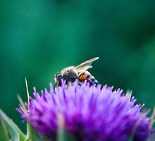 The Bee & The Thistle by Spiiral