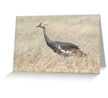 Juvenile Grey Crowned Crane, Serengeti, Tanzania  Greeting Card