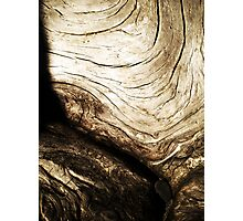Curving Tree Photographic Print