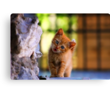 Precious Look Canvas Print