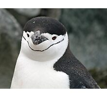 Chinstrap penguin 15 Photographic Print