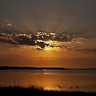 Ducks at Sunrise - Chittaway Bay by AmyBonnici