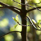 Spring Time II by HELUA