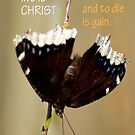 To Live is Christ ~ Phil 1:21 by Robin Clifton