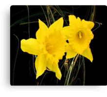 The Dainty Daffodils Canvas Print