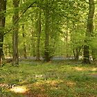 Cranham Woods - April 2011 - Panorama 1 by Martin Carr