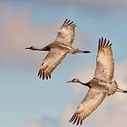 Sandhill Cranes in Flight by David Friederich