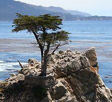 Lone Cypress by SkoyaMoore