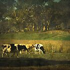 The bush, the cows, the gums ... by Chris Armytage