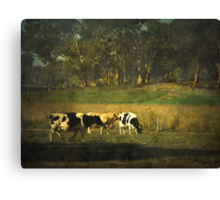 The bush, the cows, the gums ... Canvas Print