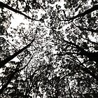 Trees of a Daylesford Forest by O(c)T YoungBearPhotography