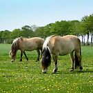 Horses,  Daisy and Dandelion by ienemien