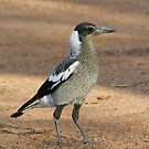 Magpie Two by Rick Playle