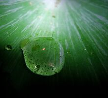 Droplet on Fern. by Ramzee86