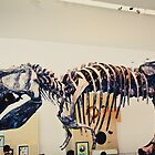 Whoa is that the rest of the T-Rex? by WilliamJPhoto