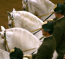 Lipizzaner Stallions in Formation by chrstnes73