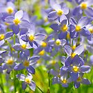 A Sea of Bluets by Jane Best