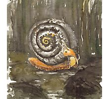 Fibonacci's snail  Photographic Print