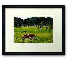 Ubud Rice Fields Framed Print