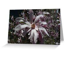 Magnolia Tease Greeting Card