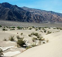 Sand Dunes of Death Valley by Ginger
